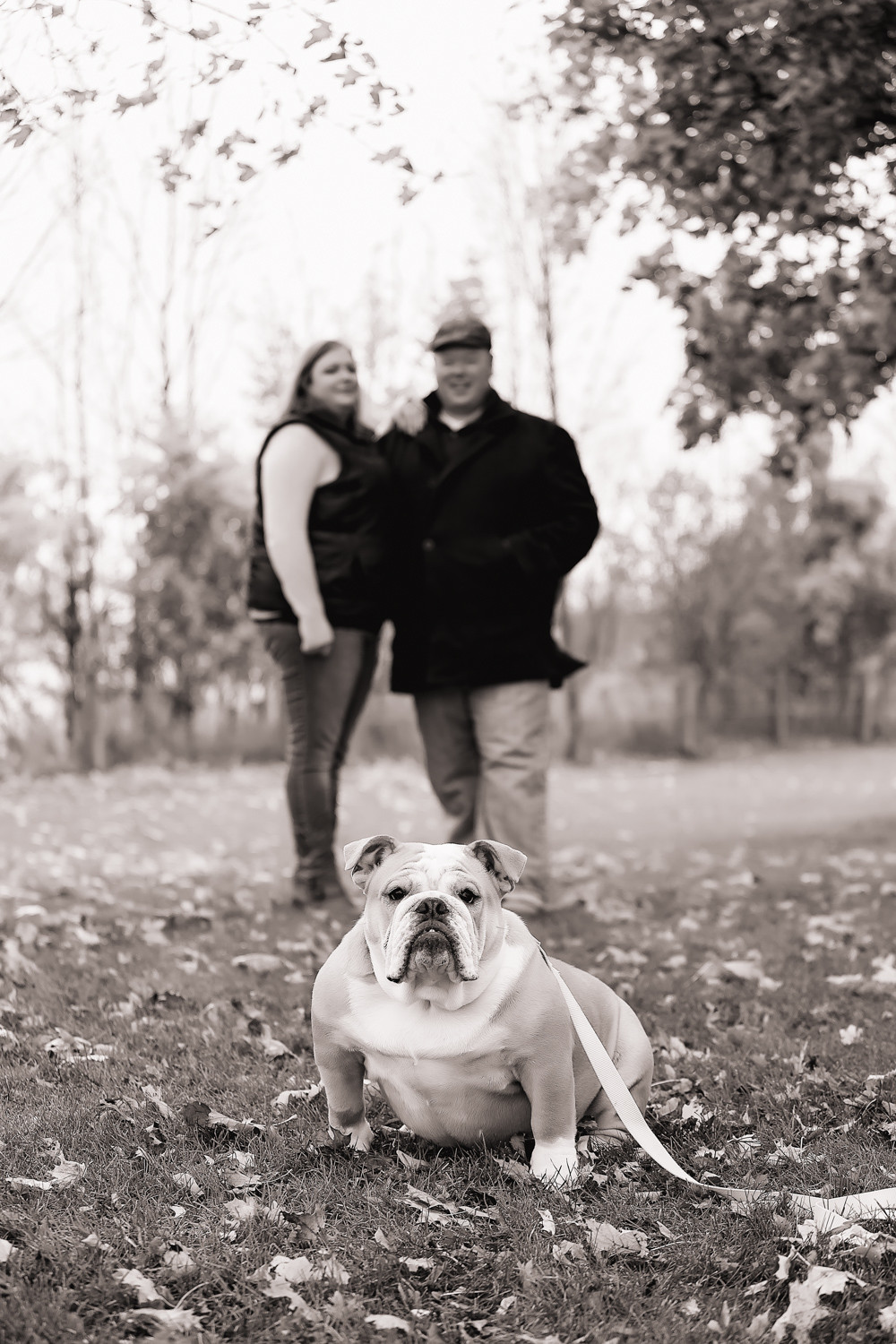 bulldog fall engagement Scarborough Bluffs Toronto Engagement Photographer